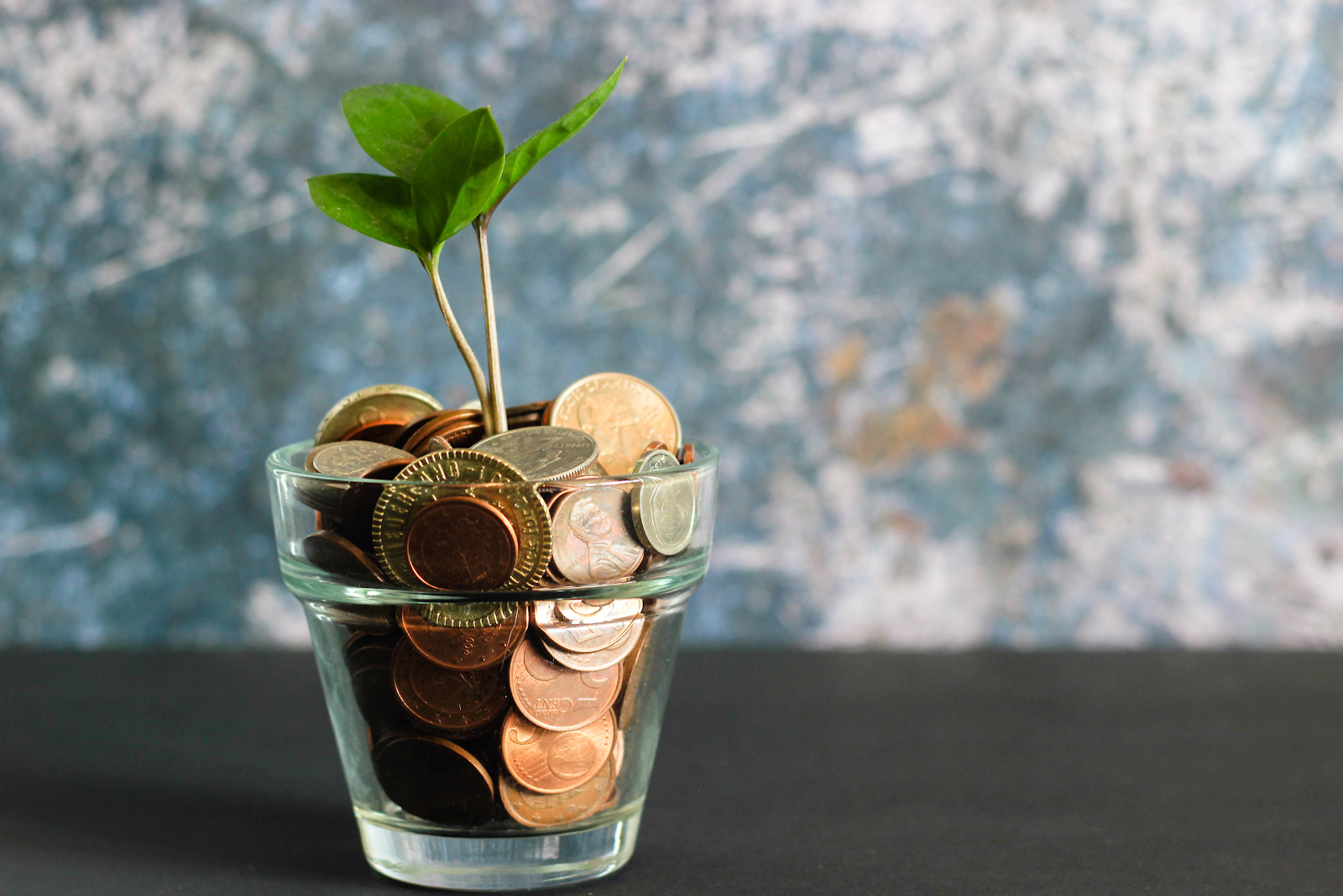 Image of plant growing out of bowl of coins
