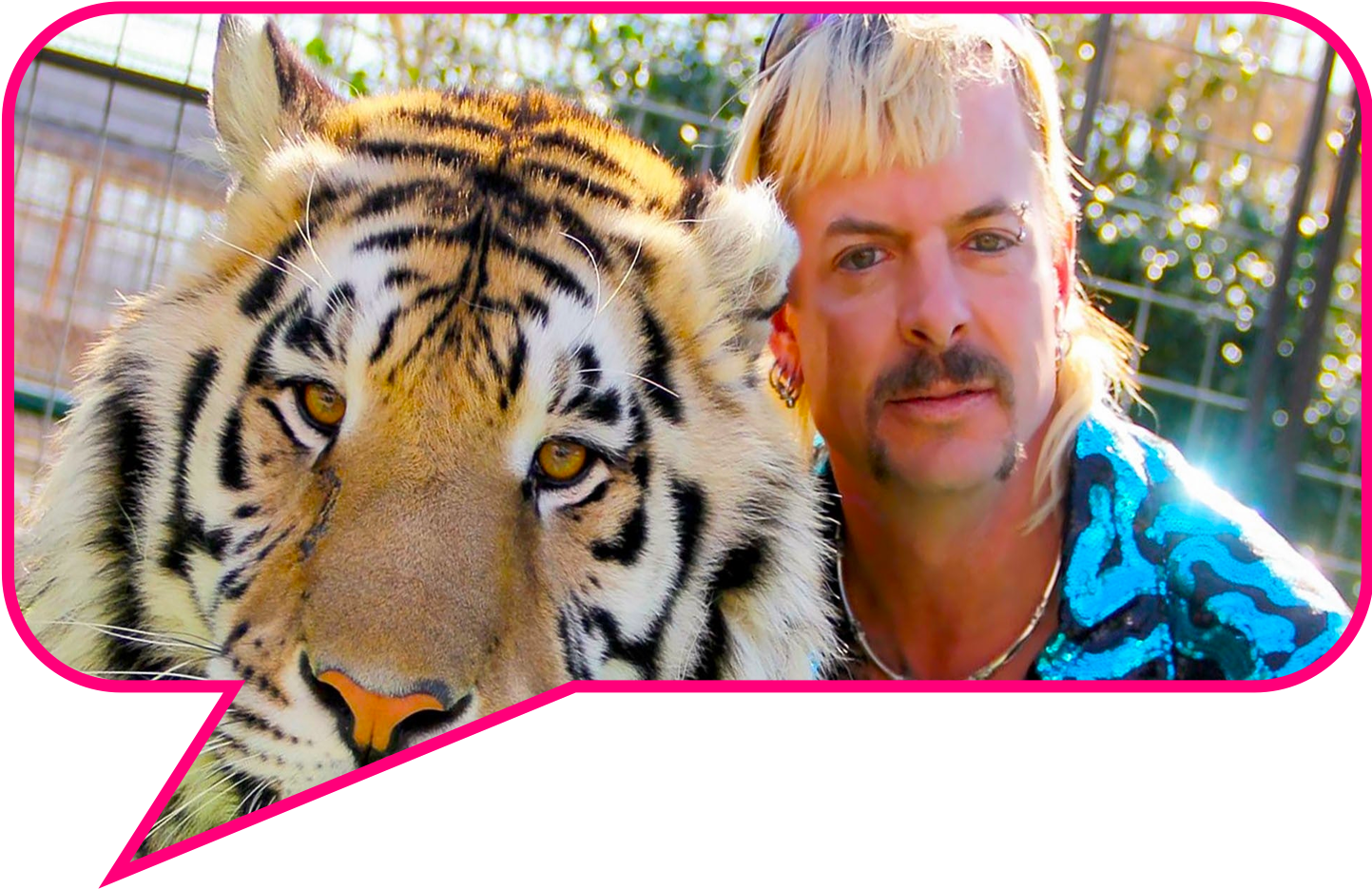 Image of Tiger King in pink speaking bubble